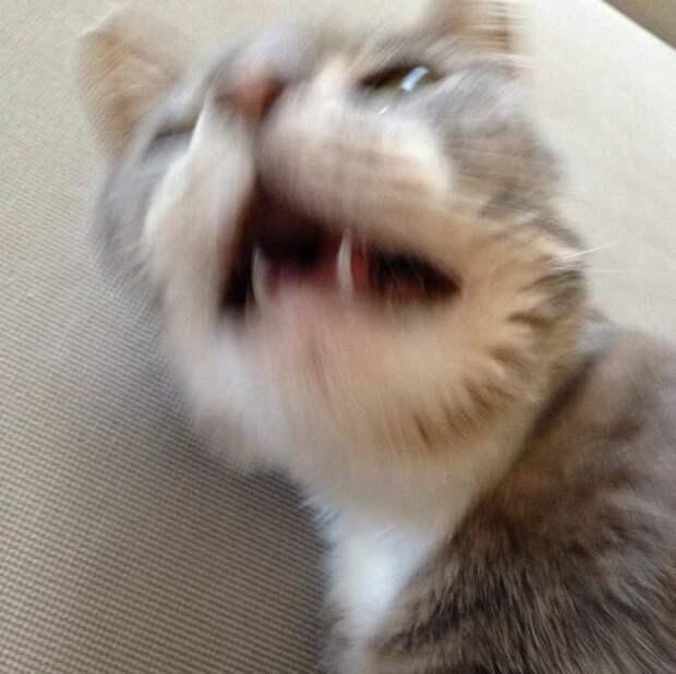 16. Говорят коту: «Будь здоров!», когда он чихает домашний питомец, животные, кот, кошка, привычки, прикол, юмор