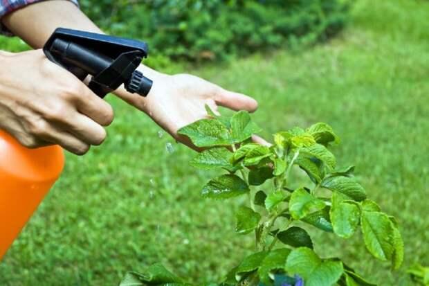 7 способов применения хвои на садовом участке