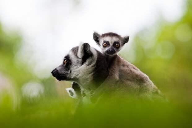 Милые и смешные животные в фотографиях