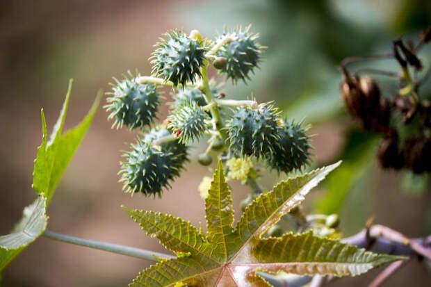 Самые смертельные растения планеты