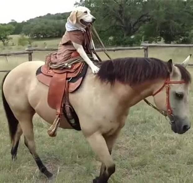 Сенсация: собака оседлала лошадь (видео)