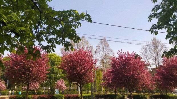 Самые зеленые и красивые места для прогулки в Краснодаре