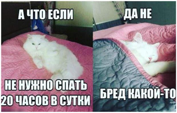 И не понимают, что еще нужно делать, кроме сна и еды интересное, коты, смешное