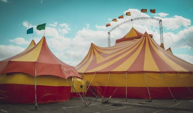 Можетли быть цирк без животных? Мнения артистов изоозащитников