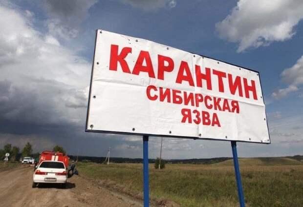 В Туве закрыли на карантин село из-за сибирской язвы