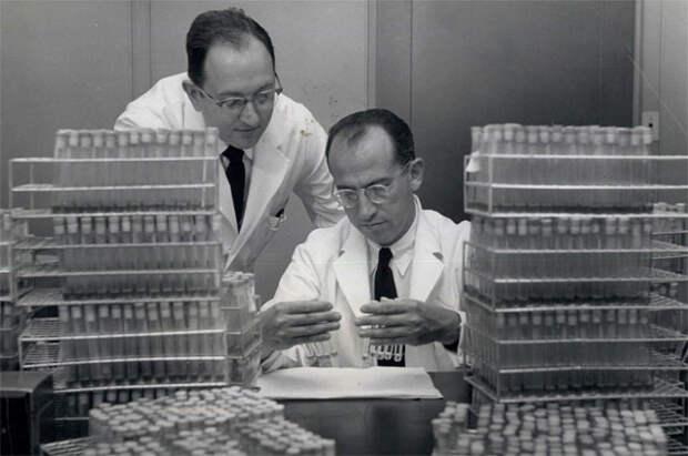 Джонас Солк (1914-1995)- вирусолог, создатель первой вакцины против полиомиелита.