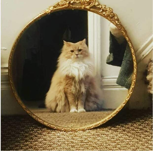 15 смешных фото о том, как животные разглядывают себя в зеркале