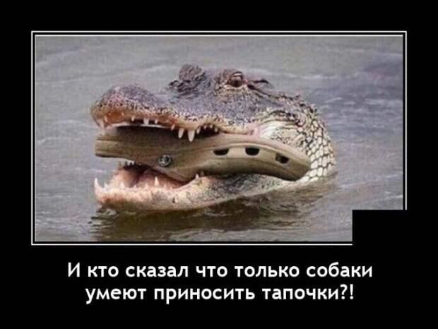 Демотиватор про крокодила