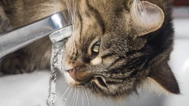 Жители Москвы проверили сроки отключения горячей воды на mos.ru более 280 тысяч раз