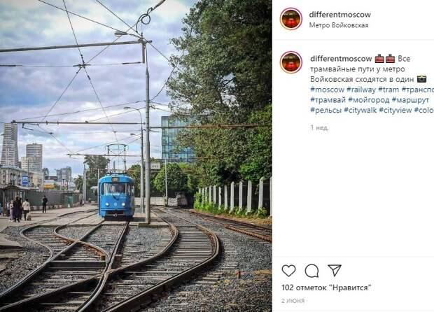 Фото дня: рогатый красавец едет по своему маршруту в Войковском