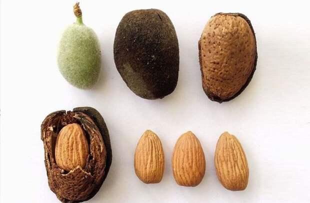 10 продуктов питания, которые существуют благодаря древней генной инженерии