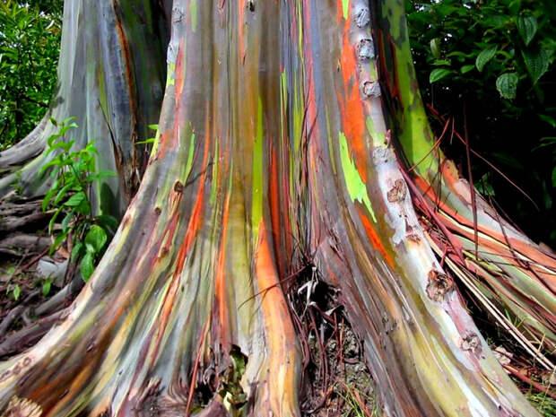 Ядовитая яблоня, взрывоопасные плоды и еще 8 фактов о деревьях