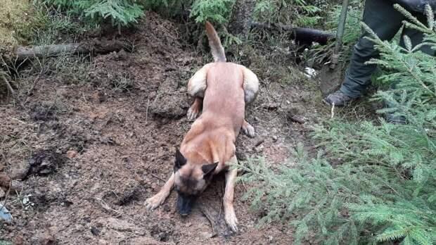 Владельцам собак объяснили смысл странного поведения питомцев