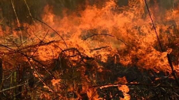 Природные пожары превращают впепел дачные поселки вРоссии