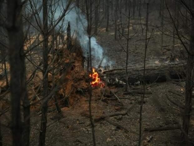 Два лесных пожара начали действовать в Забайкалье в ночь с 9 на 10 мая