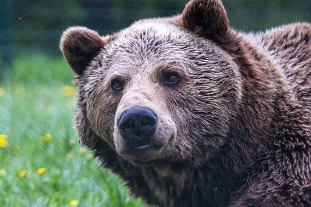 Житель Хабаровского края погиб в схватке с раненным медведем