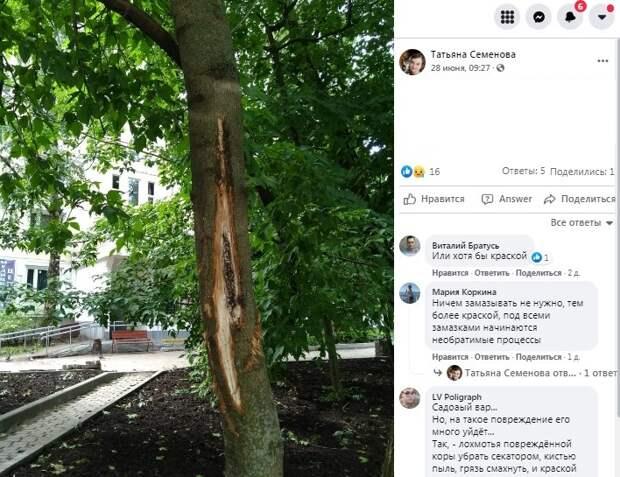 Раненому дереву на Дыбенко оказали помощь