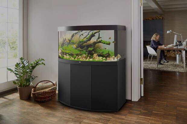 Домашний аквариум - содержание и уход