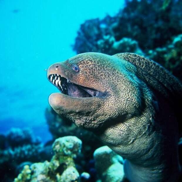 12 самых опасных подводных гадов Египта, встречи с которыми лучше избегать