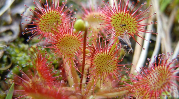 Цветы с зубами: растения, которые на самом деле могут укусить