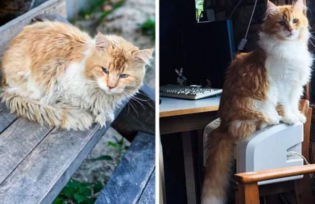 20+ животных, которые изменились до неузнаваемости, когда наконец обрели любящих хозяев