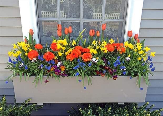 17 вариантов оконных ящиков для цветов