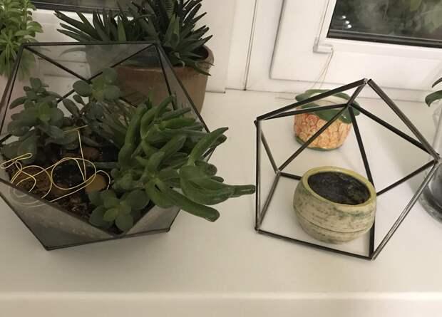 Флорариум из пластиковых трубочек, или Стильный декор за копейки