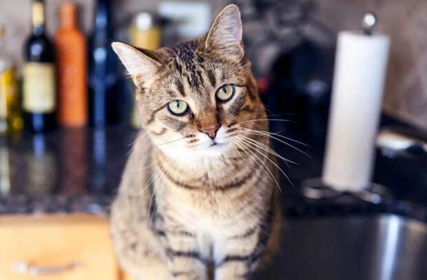 Почему кошки опрокидывают вещи? Объяснение ветеринара