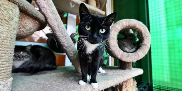 Жители района выловили из люка брошенных на произвол судьбы кошек