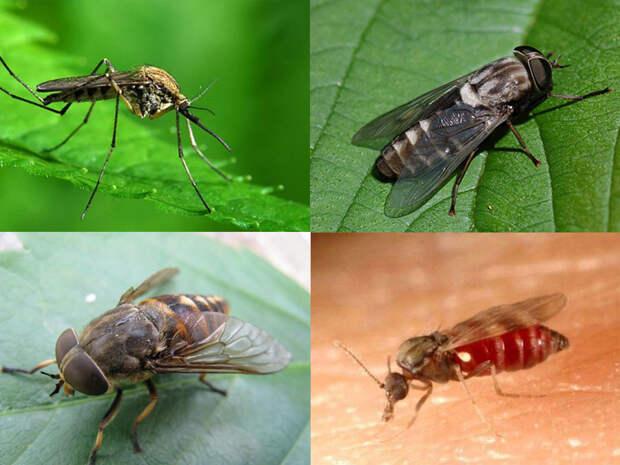 Деревенский способ избавить дом от мух, мошек, комаров и любых других насекомых. При помощи сковороды и камфоры
