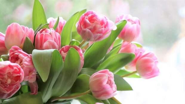 В Молжаниновском пройдет праздник «Есть в марте день особый»