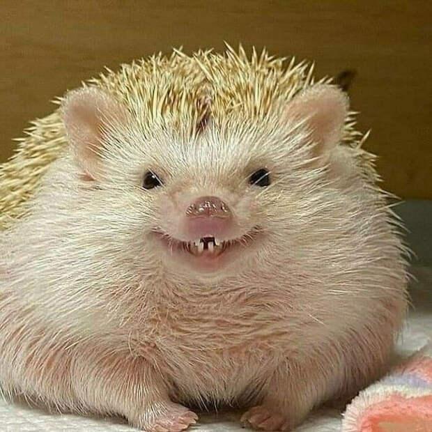 Забавные фотографии животных.