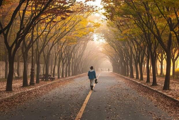 Дороги, Девочка, Деревья, Прогулка, Туман, Тротуар