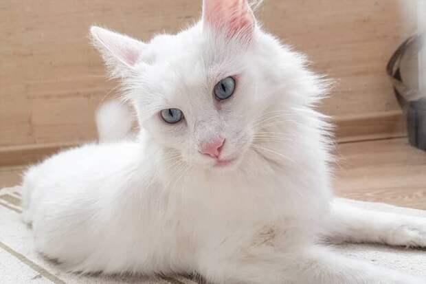 Белый котёнок мог попасть в руки к недобрым людям, но всё изменилось в последний момент
