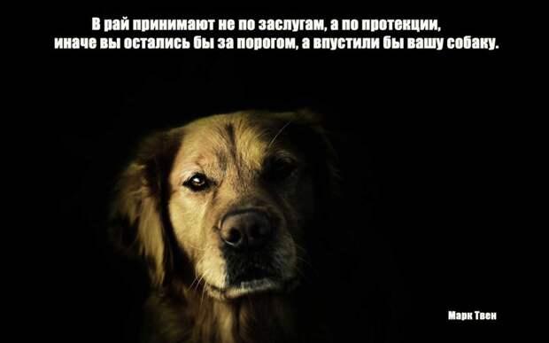 12.  афоризмы, животные, собаки