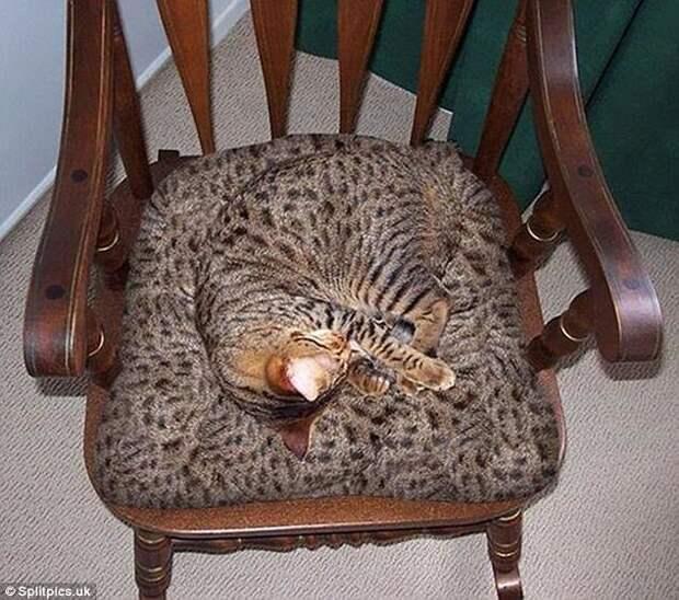 8. Идеальный фон домашние животные, коты, кошки, маскировка, маскируется, прятки, смешные кошки
