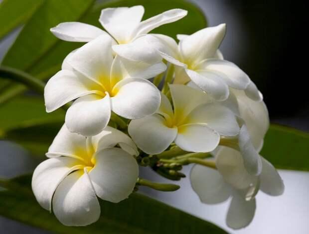 Белая орхидея фото
