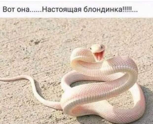 Новый русский приехал на отдых в арабскую страну.  Съездил на все экскурсии...