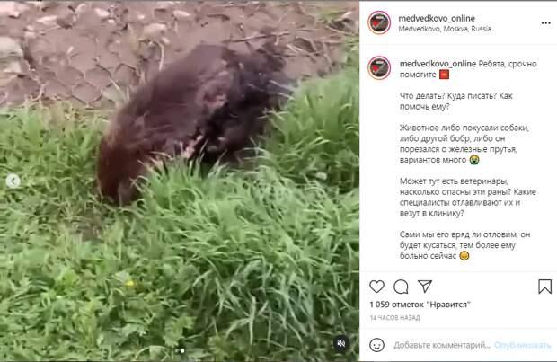 Раненого бобра обнаружили жители района в парке «Яуза»