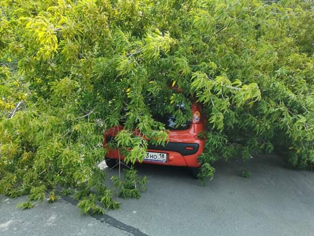 Дерево упало на машину в Ижевске