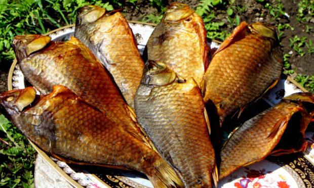 Холодное копчение рыбы в походных условиях