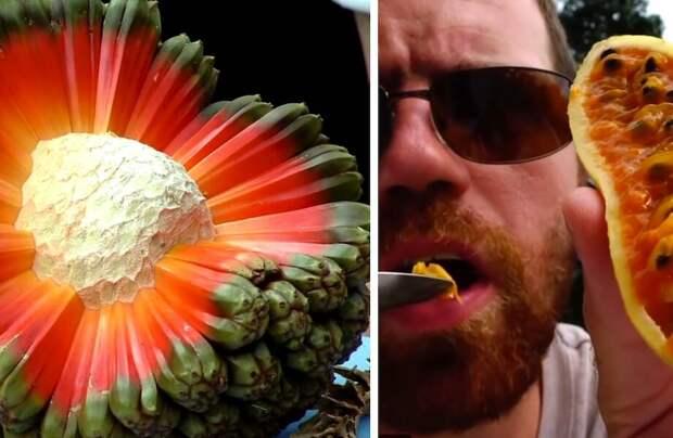 Видео: Удивительные фрукты, о которых мало кто слышал