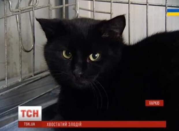 Кот объел харьковский мясокомбинат на 26 тысяч рублей