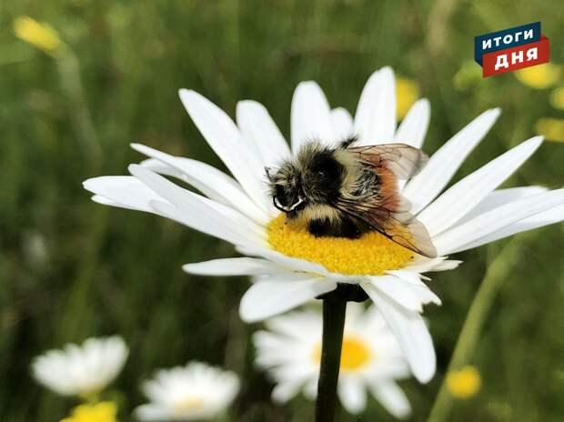 Итоги дня: вакцина для сильных и массовая гибель пчел в Сарапульском районе Удмуртии
