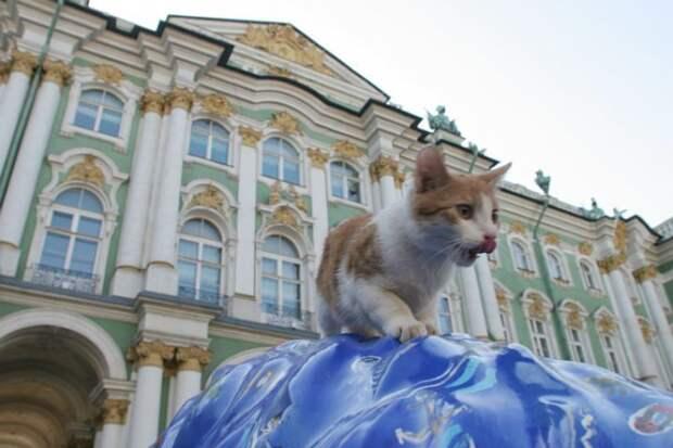 Как архитекторы Эрмитажа кошачье семейство спасали