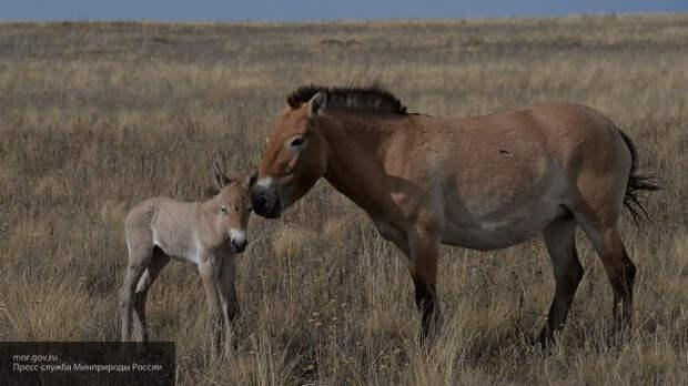 Ученые рассказали об уникальных лошадях под Чернобылем