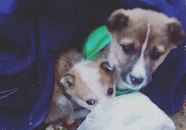 Укрытие из курток и шапок: под Иркутском третьеклассники спасли от мороза двух подкинутых в школу щенков