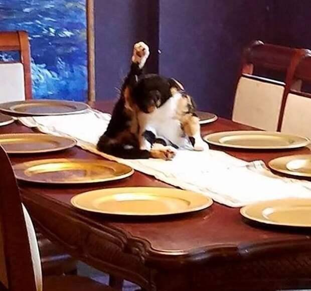 А мне всё равно, что у вас обед весело, коты, повадки, смешно, эмоции
