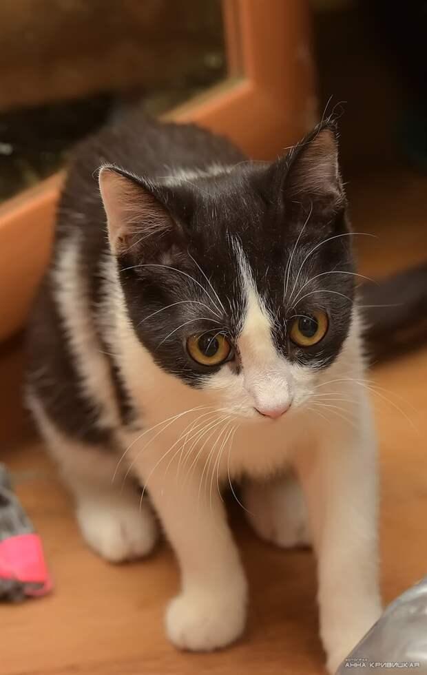 Есть кошки очаровательные, а есть - особенно очаровательные )
