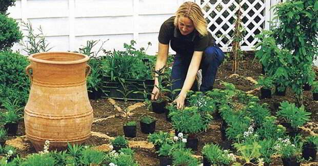 Красота и изысканность: Умелые садоводы поделились завораживающими идеями дачных клумб